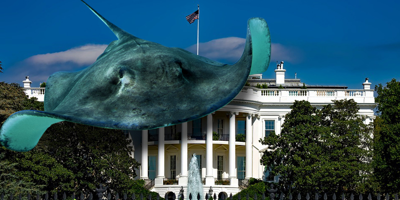 SS7 vulnerability still going strong near the White House